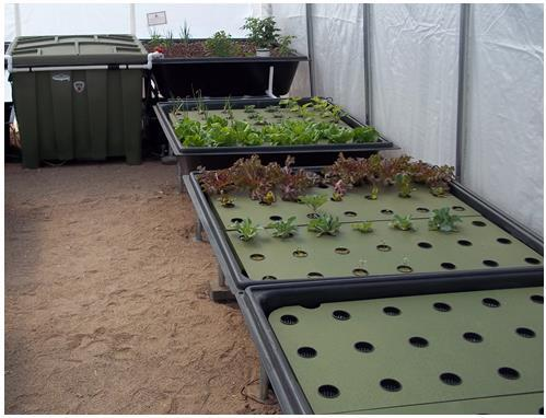 Sanctuary 64 LS Aquaponics System With 64 Sq Ft Of Grow Space
