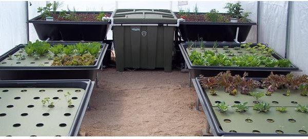 Sanctuary 96 US Aquaponics System With 96 Sq Ft Of Grow Space